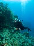 大鳄鱼潜水海岛墙壁 库存图片