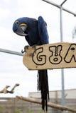 大鹦鹉金刚鹦鹉 一只大鸟以明亮的红色蓝绿色点燃 免版税库存照片