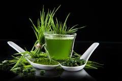 年轻大麦和小球藻spirulina 免版税库存照片