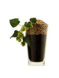 大麦和蛇麻草在一个啤酒杯在白色 免版税库存照片
