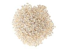 大麦少量 免版税库存照片