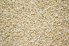 大麦干珍珠 免版税库存图片