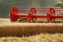 大麦收获 免版税图库摄影