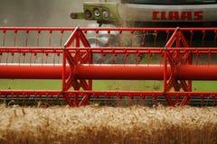 大麦收获 免版税库存图片