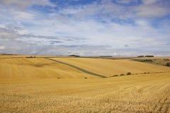 大麦收获 库存照片