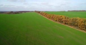 大麦田的鸟瞰图在秋天 与树的令人惊讶的风景与红色和橙色叶子在的一天 股票视频