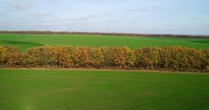 大麦田的鸟瞰图在秋天 与树的令人惊讶的风景与红色和橙色叶子在的一天 影视素材