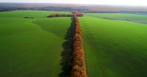 大麦田的鸟瞰图在秋天 与树的令人惊讶的风景与红色和橙色叶子在的一天 股票录像