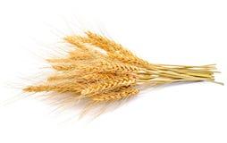 大麦的耳朵在白色的 图库摄影