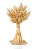 大麦的耳朵在白色的 免版税库存图片