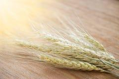 大麦米在背景的五谷种子 免版税库存图片