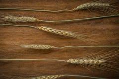 大麦米在背景的五谷种子 免版税图库摄影