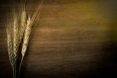 大麦米在背景的五谷种子 库存图片