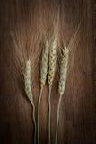 大麦米在背景的五谷种子 库存照片