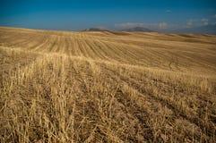 大麦草甸 免版税库存照片