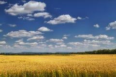 大麦领域。 免版税库存照片