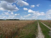 大麦领域之间的一条道路 免版税库存图片
