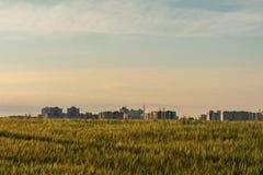 大麦领域位于在城市附近 库存照片