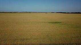 大麦领域和好日子,美好的自然风景 r 股票视频