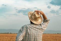 大麦领域的担心的农夫在一个大风天 免版税库存图片