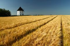 大麦领域 免版税库存照片