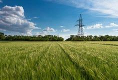 大麦领域 库存照片