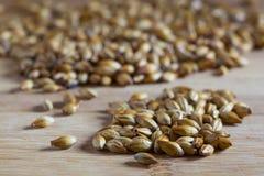 大麦麦芽 免版税库存图片
