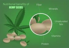 大麻事实和保健福利大麻籽营养素  大麻籽的营养好处 有用的组分  库存例证