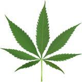 大麻叶子向量 库存照片