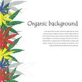 大麻叶子 大麻植物背景 手拉的样式 免版税图库摄影