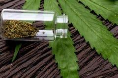 大麻在实验室服麻醉剂,对大麻的分析 免版税库存图片