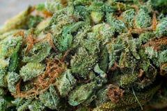 大麻宏观照片收获与用trichomes盖的叶子的锥体 大麻植物clse视图 免版税图库摄影