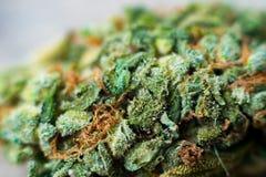 大麻宏观照片收获与用trichomes盖的叶子的锥体 大麻植物clse视图 库存照片