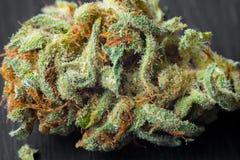 大麻宏观照片收获与用trichomes盖的叶子的锥体 大麻植物clse视图 库存图片