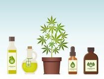 大麻植物和大麻油 医疗大麻 库存照片