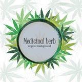 大麻植物背景 大麻叶子 免版税库存图片
