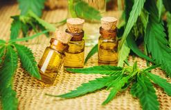 大麻草本和叶子治疗汤的,酊,萃取物,油 免版税库存照片