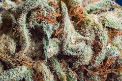 大麻,大麻宏观trichomes thc花漂白亚麻纤维重要从未变朦胧 浅焦点作用 库存图片