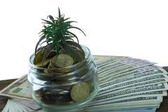 大麻,大麻, Ganja,在比尔的大麻绿色叶子100美元 到达天空的企业概念金黄回归键所有权 大麻叶子和美元 库存照片