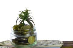 大麻,大麻, Ganja,在比尔的大麻绿色叶子100美元 到达天空的企业概念金黄回归键所有权 大麻叶子和美元 库存图片