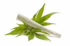 大麻 库存照片