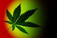 大麻 图库摄影