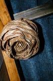 大黄蜂巢垂悬在乡间别墅的屋顶下 库存图片