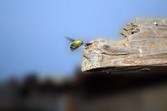 大黄蜂部分木头 免版税库存照片