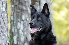 大黑德国牧羊犬混合品种狗,宠物抢救 免版税图库摄影