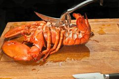 大,放出的龙虾削减了胸部区域壳与厨房剪的 免版税图库摄影