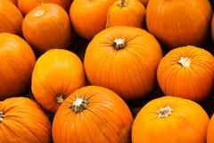 大,橙色南瓜 库存图片