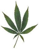 大麻七点罐叶子 图库摄影