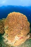大水下的海绵 库存图片