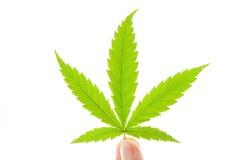 大麻例证查出的叶子向量 免版税库存照片